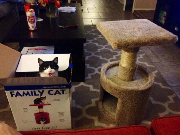 Ezek a macskák tönkre akarják tenni az életed - vicces fotók