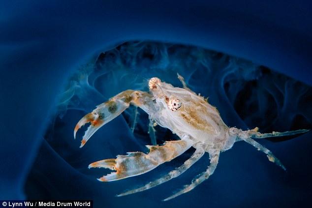 Amatőr fotós lélgezetelállító képei az óceán mélyéről