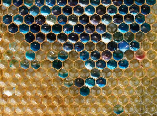 Színes mézet gyártanak a méhecskék