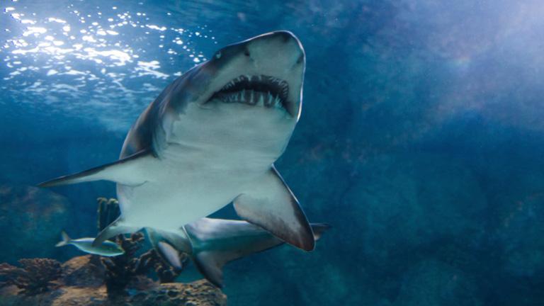 Újszerű védekezés jön a cápák ellen