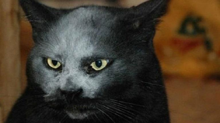 Megtalálták a Sátán macskáját