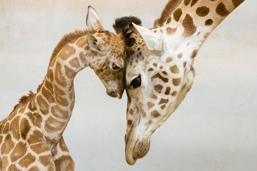 A legcukibb anyukák és kicsinyeik az állatvilágból