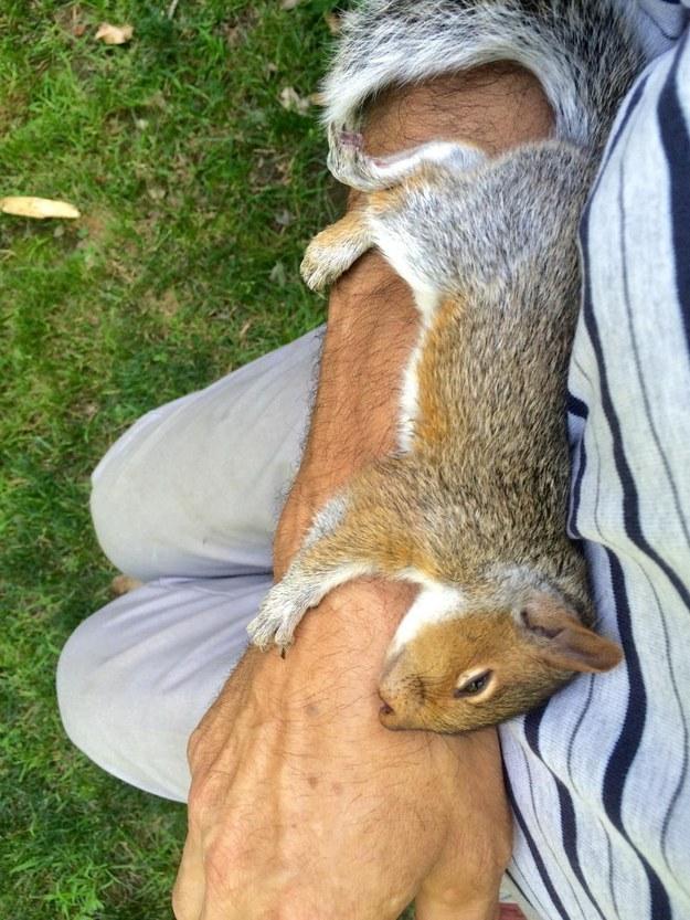Rossz az idő kint? Nézegess vicces mókusokat és mosolyogni fogsz!