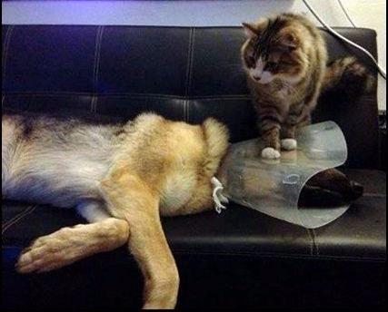 Íme, a világ legboldogabb macskái - vicces képek