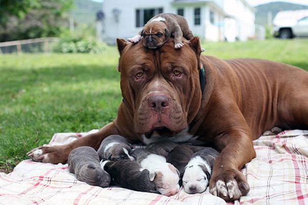 Megacuki mamakutyák és kisbabáik