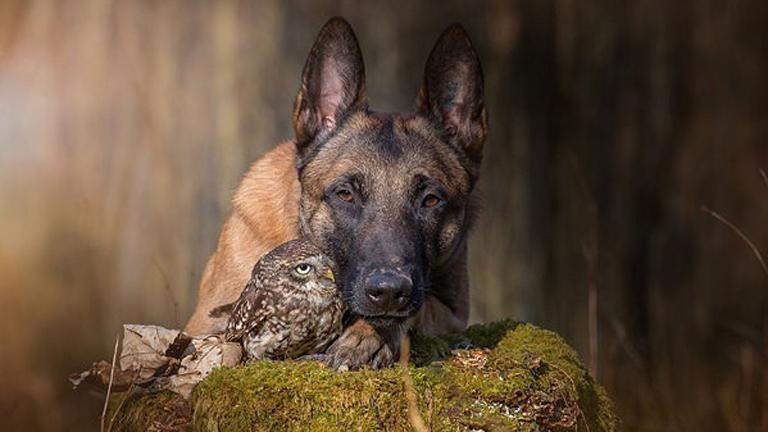 Szokatlan barátság: a kutya és a bagoly