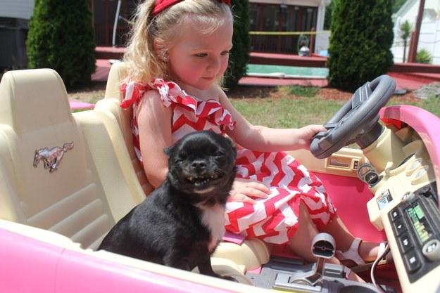 22 dolog, aminek az emberek és a kutyák is ugyanúgy örülnek