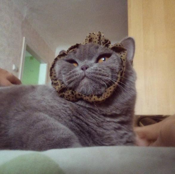23 macska, akik hasznos tanácsokkal látnak el az élet minden területén - vicces képek