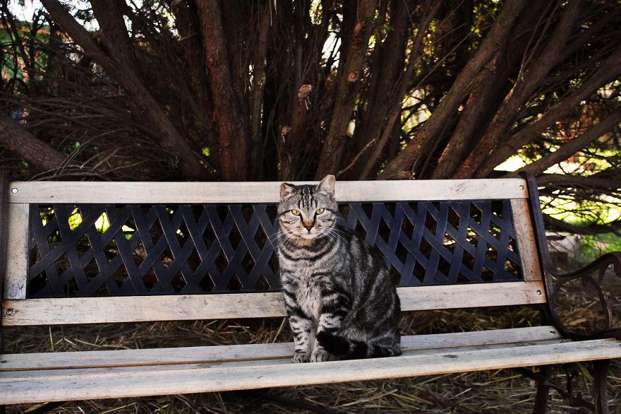 Íme a macskamennyország