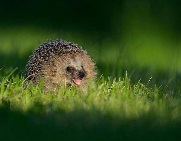 Állati boldogság - Mosolygó állatok a világ minden tájáról