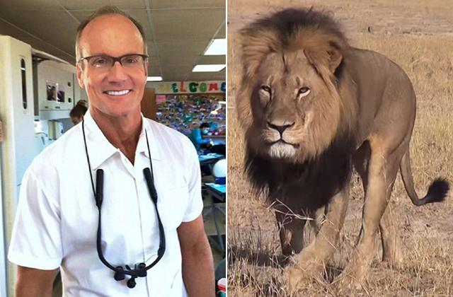 Ejtették a vádat Cecil, az oroszlán gyilkosa ellen