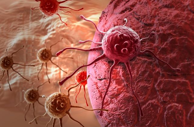 A véletlennek köszönhetően találták meg a rák ellenszerét