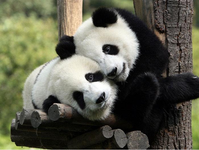 Ünenpeljük meg az ölelés világnapját tündéri ölelkező állatokkal - képek
