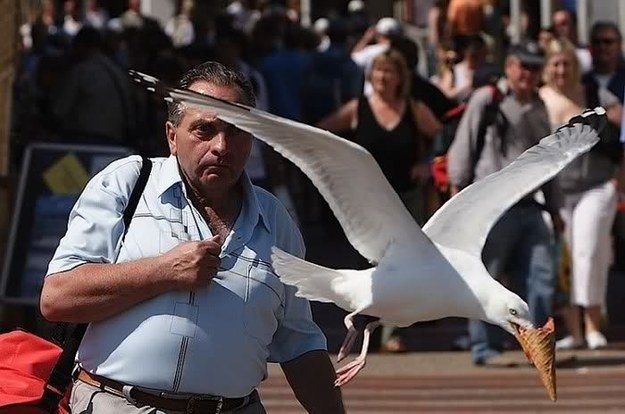 madarak, akik az őrületbe kergetik az embereket - vicces képek