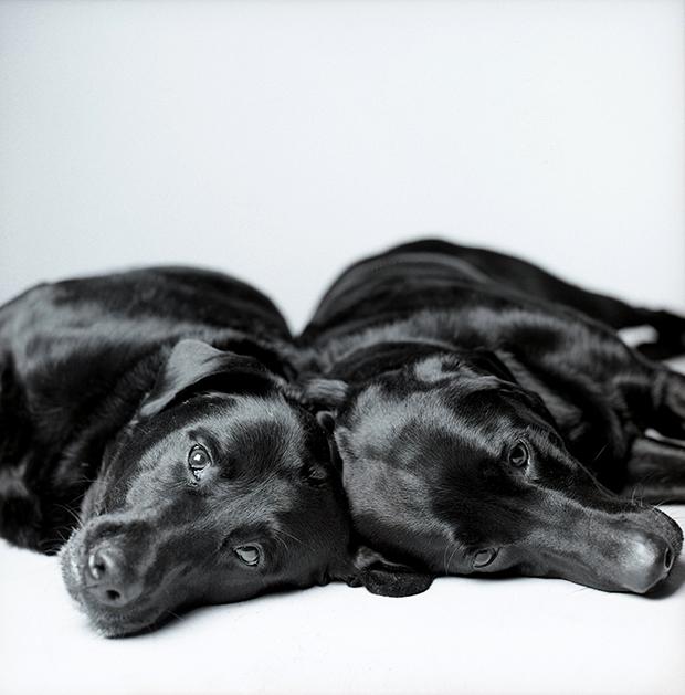 Megható kutyaportrékat készít egy fotós