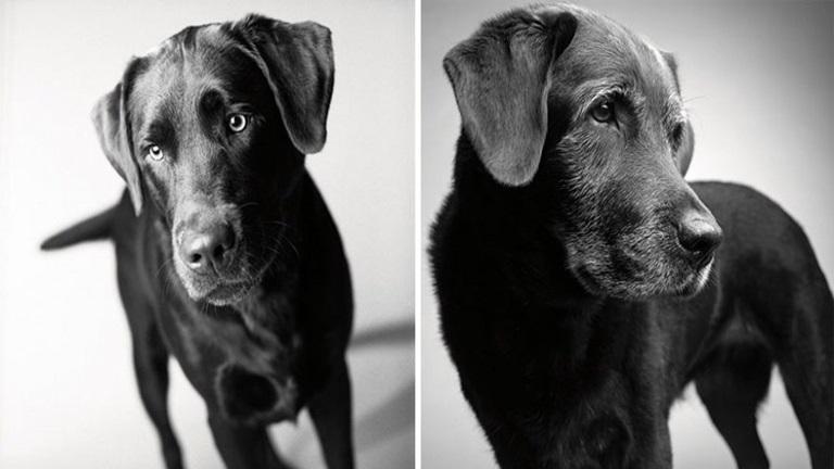 Így öregszenek meg hű társaink, a kutyáink