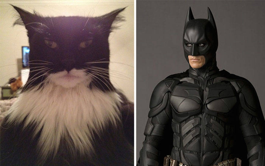 15 Vicces hasonlóságok képekben