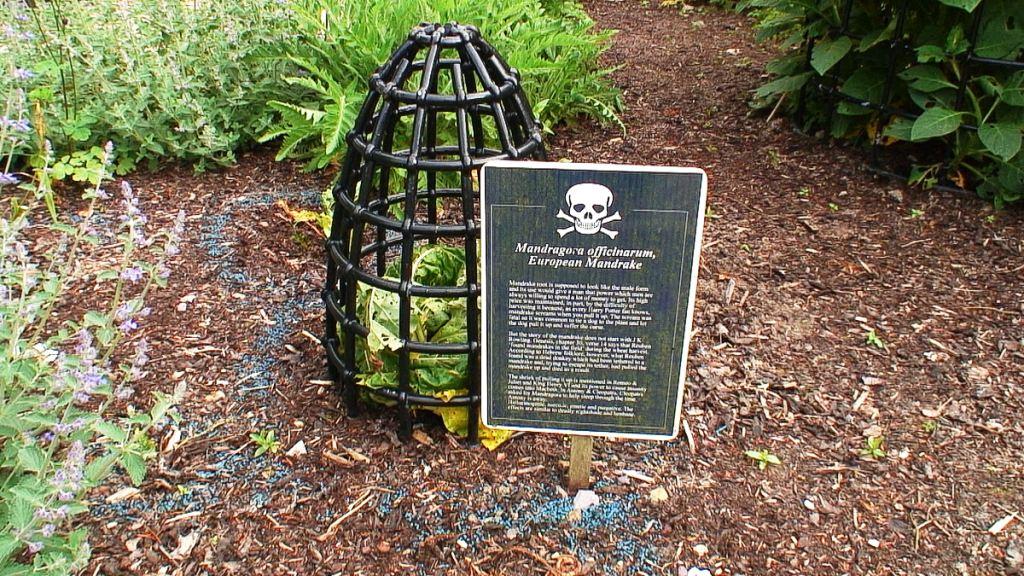 A kert, ahol minden növény halálos méreg