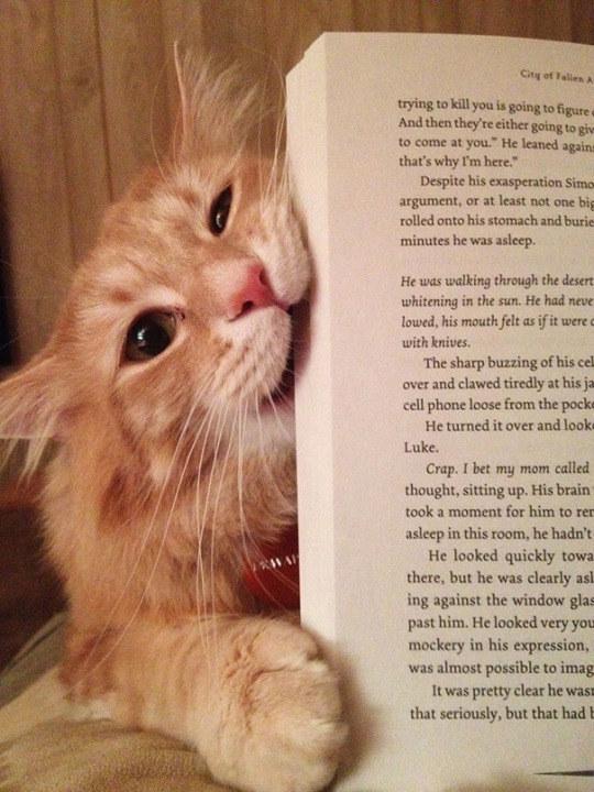 18 macsek, aki nem hagyja a gazdáját olvasni - vicces képek