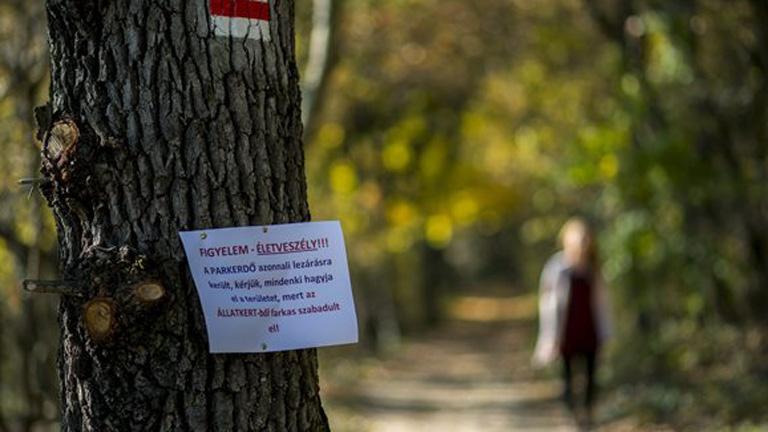 Szökött farkasra figyelmeztető felirat a pécsi parkerdőben