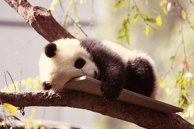 Nézegess hétfőn cuki álmos állatokat! - tündéri képek