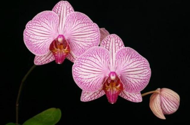 Így gondozd az orchideád télen