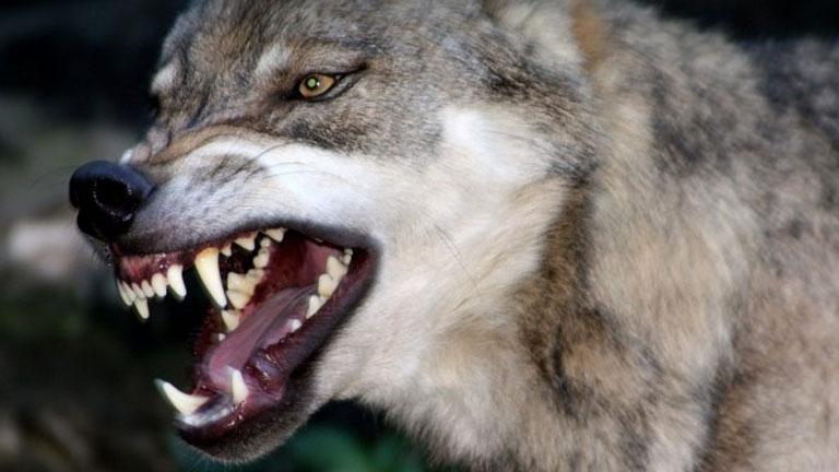 Nem cuki háziállat  (Fotó: Tumblr.com)