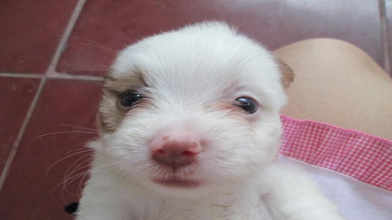 Itt egy csomó kiskutya, akiktől szebb lesz a napod!