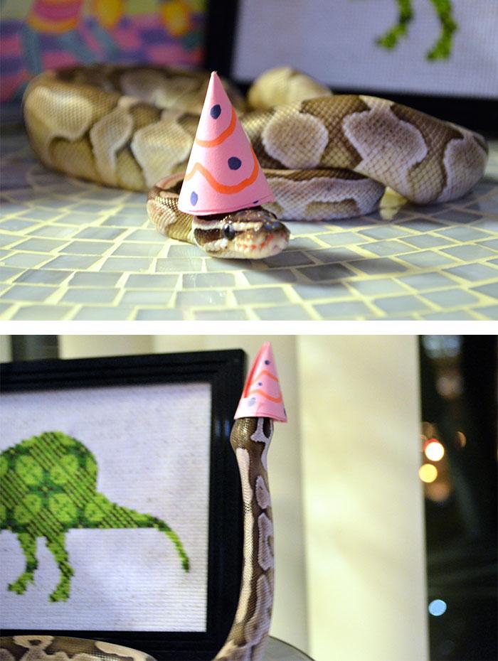 Még a kígyók is aranyosak lesznek egy jópofa fejfedőtől! - fotók