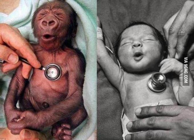 A nap képe: ennyire hasonlít a baba és a kismajom