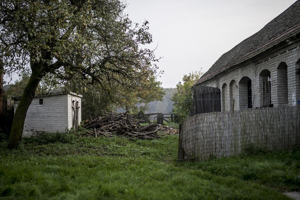 Valaha ötven hízójuk volt a házuk mögötti istállóban Fotó: Hajdú D. András