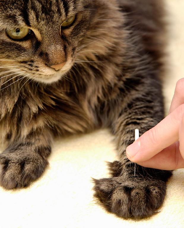 Kipróbálnád az állataidon az akupunktúrát?