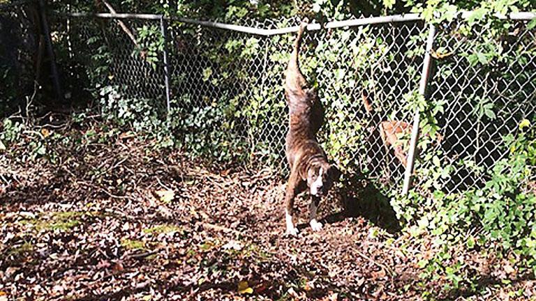 Két napig őrizte szorult helyzetbe került barátját a kutya