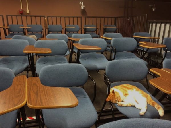 Állati diák: iskolába jár a macska