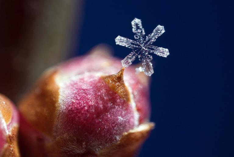 1988-ban igenis találtak két egyforma hópelyhet- 12 érdekesség a hóról