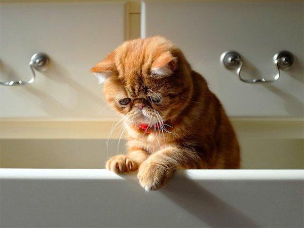 Bűnbánó macskák, akiknek azonnal megbocsátanál | nlc