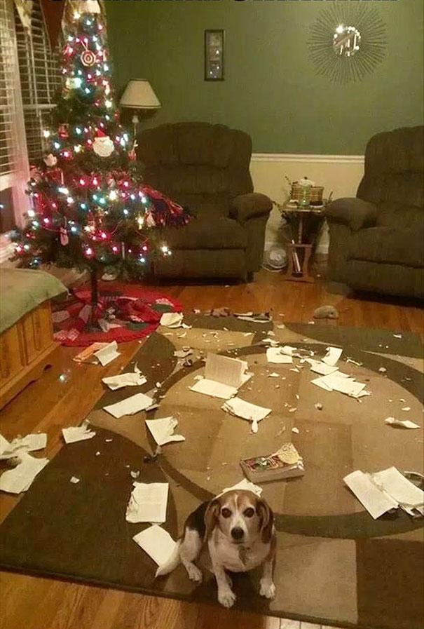 Amikor az állatok kinyírják a karácsonyt