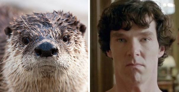 10 ok, amiért Benedict Cumberbatch egy vidra