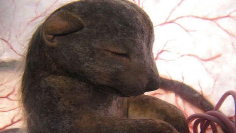 8 állatbébi az anyukája hasában - elképesztő fotók