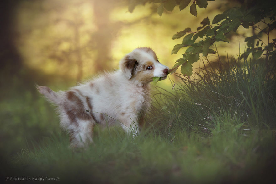 Lenyűgöző fotók: kutyák élvezik a természet szépségét