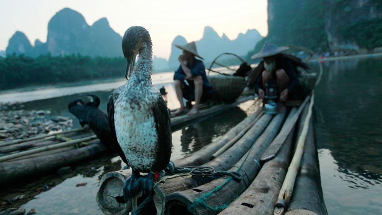 Kínai halászok és egy kávészünetét töltő nagy kormorán