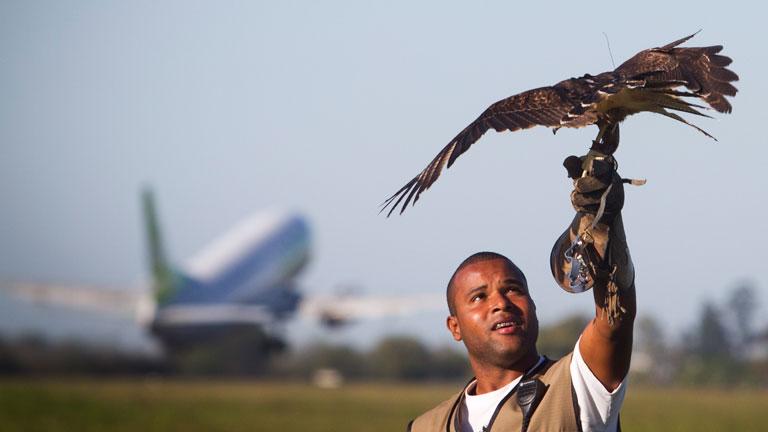 Bevetésen a brazíliai Filho International reptér elhárító sólyma