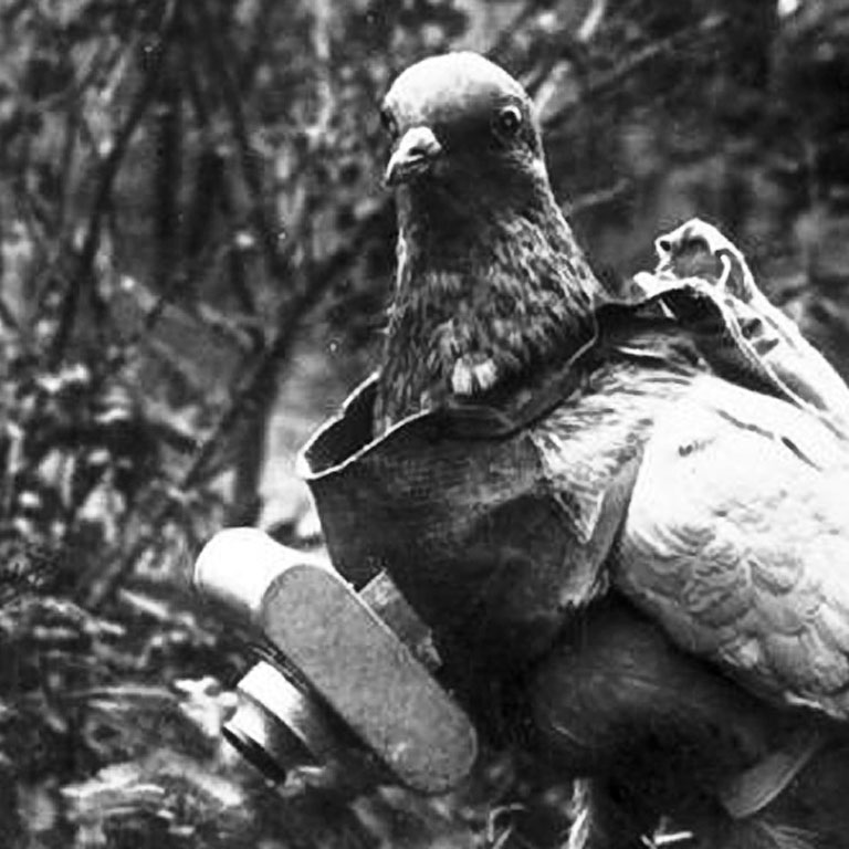 Első világháborús felderítő fotós galamb, a drónok elődje (Fotó: Wikipedia)