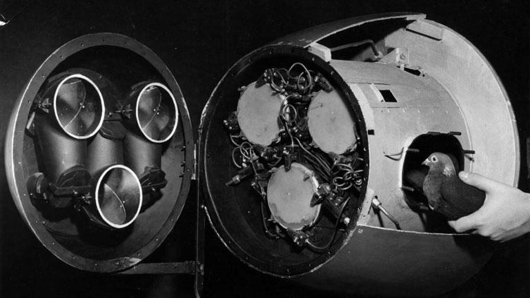 A Project Pigeon során alkalmazott, galambok által vezérelt rakéták (Fotó: Naval History and Heritage Command)