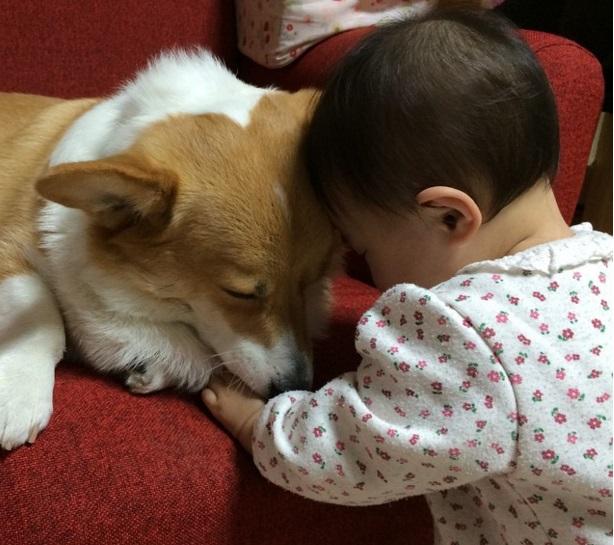 Napi cukiság: legjobb barátok a baba és a corgi kutya