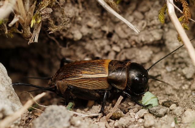 Ez a cukiság lett az év rovarja - fotó