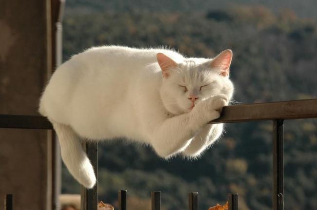 20 macska, akik úgy tudnak aludni, ahogy senki más - vicces képek