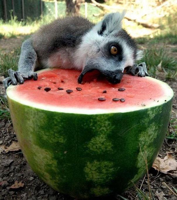 Ezektől a cuki evő állatoktól te is mosolyogni fogsz - vicces fotók