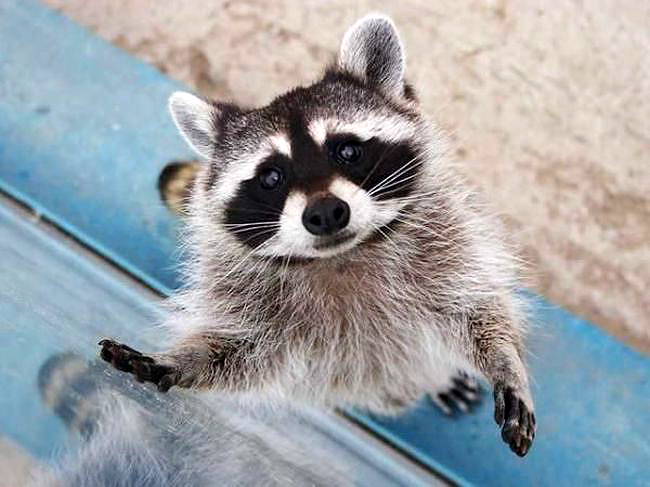 20 állat, aki úgy tud könyörögni, hogy nem tudsz nekik ellenállni - cuki fotók