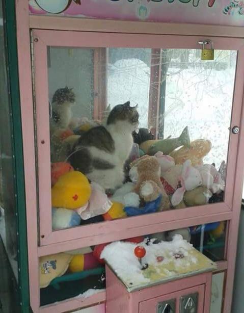 Játékautomatába menekült a hideg elől a kóborcica
